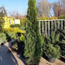 Растения для сада большой ассортимент, в Мытищи