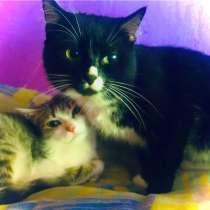 Отдам в добрые руки, 2 кота и кошечка ?, в Белово