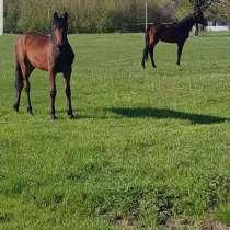 Лошади, в Губкине