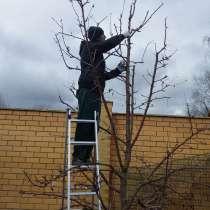 Спил и кронирование плодовых деревьев. Коломна, в Коломне