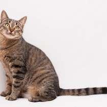 Рыся - красивая молодая кошка в добрые руки, в Москве