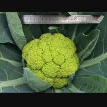 Голландские семена овощных культур, в г.Бишкек