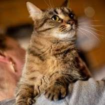 Фиби - ласковая молодая кошечка в дар, в Москве