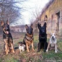 Коррекция нежелательного поведения собак, в г.Брест