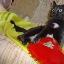 Кошечка-праздник Тося (10 мес.) в добрые руки, в Москве