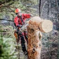 Спилить дерево с помощью альпинистов + подарок!, в г.Могилёв