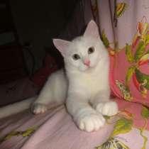 Необычный белый котик от као мани и рагамаффина, в г.Мариуполь