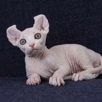 Elf kitten, в г.New York Mills