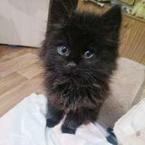 Пушистый котёнок мальчик в дар, в г.Лида