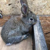 Кролики, в Домодедове