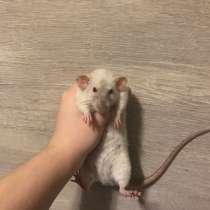 Крыса девочка, в Химках