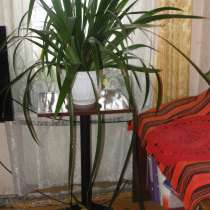 Продается комнатный цветок за 300.0 рублей, в Иркутске