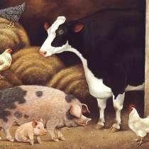 Свиной комбикорм КК 58, в Железнодорожном