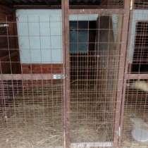 Предлагаем передержку животных, в Электрогорске