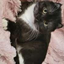 Кошка ищет новый дом!, в Электростале