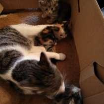 Котята в добрые руки, в Туле