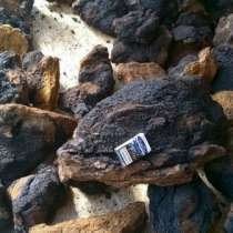 Чага березовый гриб, в Чите