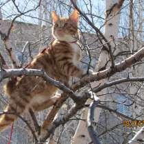 Курбобы- котята от Чемпиона Мира, в Уфе