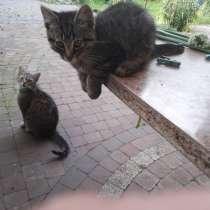 Прекрасный котик, в г.Брест