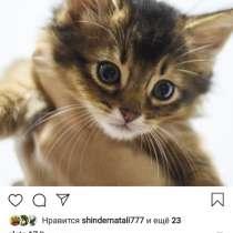Продам Сомали котят, в г.Алматы