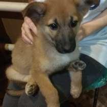 Рыженький щеночек (девочка) - в заботливые руки, в Багаевского