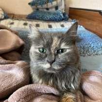 Кошка, в Челябинске
