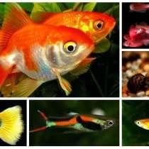 Разные мирные аквариумные рыбки, в Челябинске