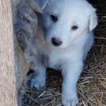 Подарю щенка, в Красноярске