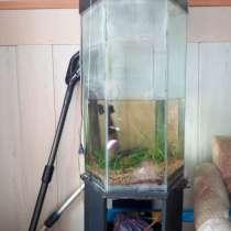 Продам стильный аквариум, в г.Усть-Каменогорск