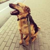Спортивный харизматичный пес-друг, в Санкт-Петербурге