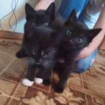 Отдам котят в добрые руки, в Ханты-Мансийске