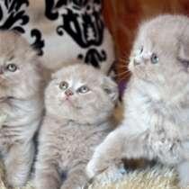 Плюшевые котята, в Краснодаре