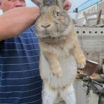 Куплю кроликов в Красноярске, в Красноярске