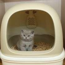 Наполнитель для кошачьего туалета светлый, в Видном