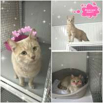 Рыжий кот ищет хозяев, в г.Алматы