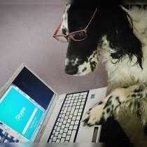 Онлайн дрессировка собак, в Москве