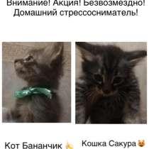 Будущие счастливчики, отзовитесь!, в Волгограде
