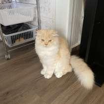 Продам породистого котёнка, в г.Bene 'Ayish