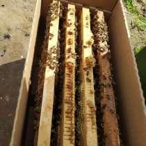 Пчелопакеты, в Орехово-Зуево