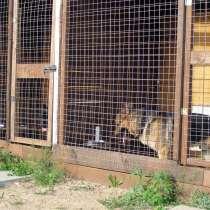 Гостиница для собак средних и крупных пород, в Голицыне