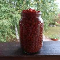 Продам ягоды облепихи, в Питкярантах