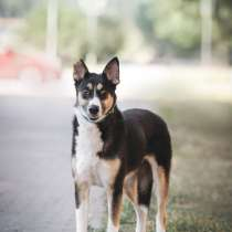 Собачка Нала в поисках дома, в Москве