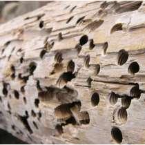 Уничтожение жуков в домах, в г.Докшицы
