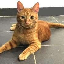 Рыжий-рыжий-полосатый. Обаятельнейший кот Филя в добрые руки, в Москве