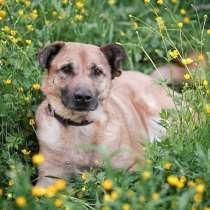 Солнечный Рыжик, пес спасенный с пром. зоны, ищет дом!, в Москве