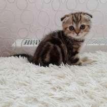 Продам котят, в Ульяновске