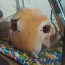 Череп в аквариум, в Волжский