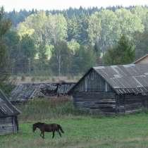Помощник по хозяйству на лошадиную ферму(г. Шелково), в Щелково