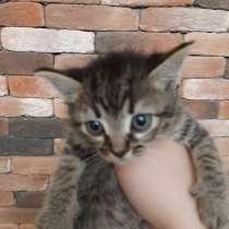 Отдам симпатичных котят, в Кисловодске