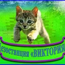 Уничтожение грызунов, насекомых - дезинфекция в Алматы и обл, в г.Алматы